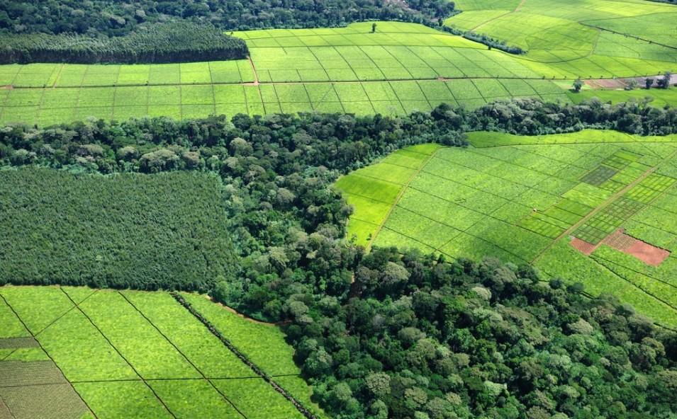 Kenyan Tea Plantations