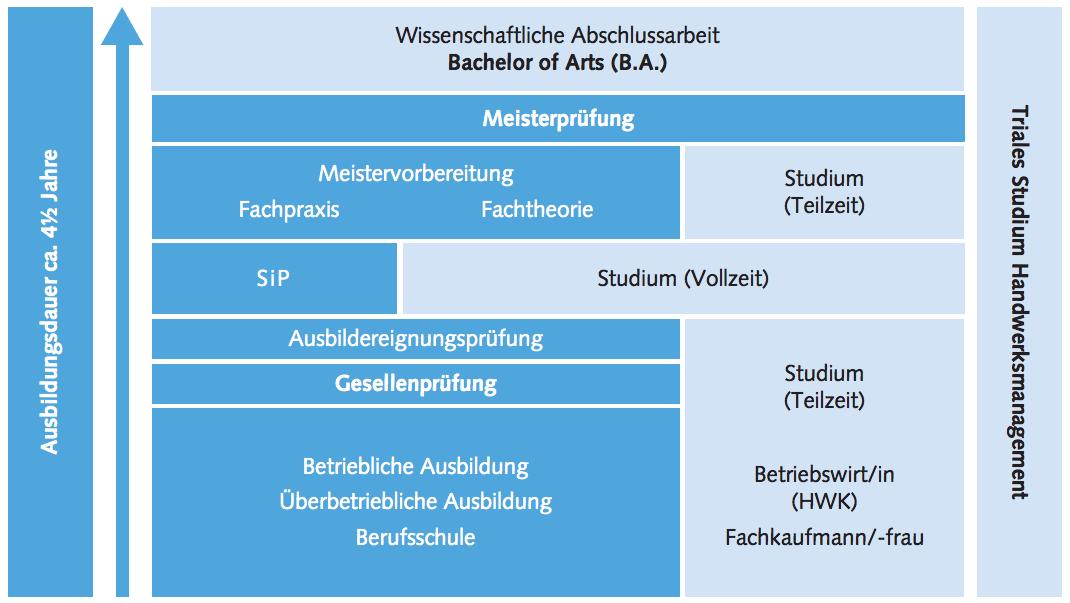 Triales Studium Structure